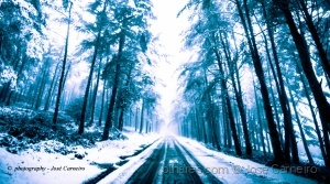 """Paisagem Natural/Photo #2542 """" CAMINHOS ... de luz fria """""""