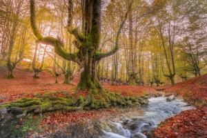 Paisagem Natural/A Floresta Mágica