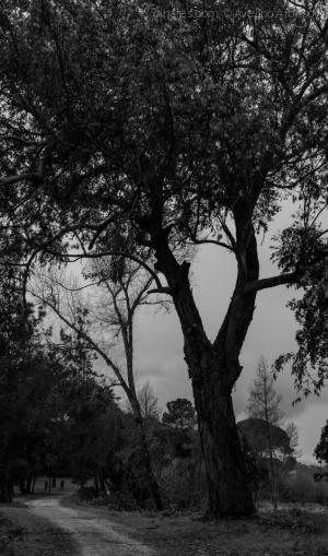 Paisagem Urbana/Natureza