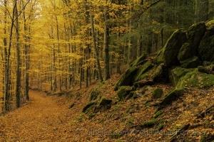 Paisagem Natural/Outono na serra