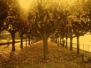 Paisagem Natural/Mais um belo caminho...