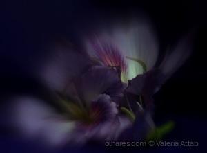 Abstrato/Ode à primavera....