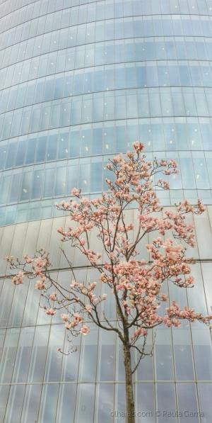 /Cheira a Primavera...