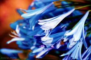 Macro/Grito Azul