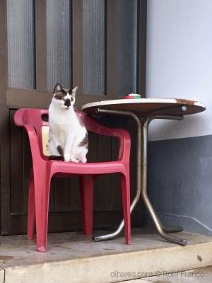 Animais/Sr. Gato