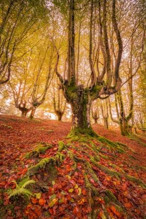 Paisagem Natural/Golden Woods