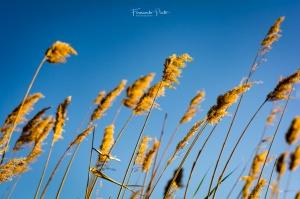 Abstrato/ao vento