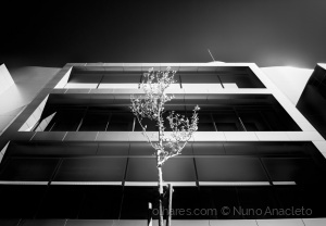 Arquitetura/The beauty in all things