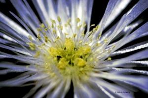 Macro/Flower Power - Macro