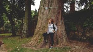 /Reparem na dimensão desta árvore