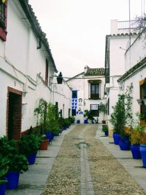 /Uma rua florida