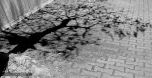 Abstrato/Sombra de uma Árvore - ler