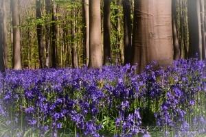Paisagem Natural/foresta blu
