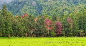 /A cores nos Açores