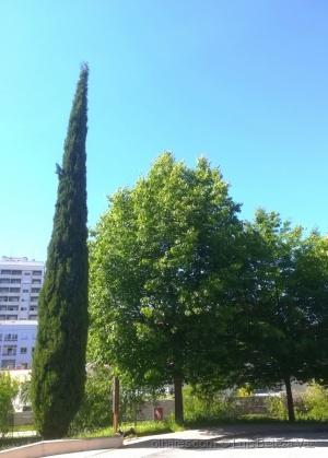 Paisagem Urbana/Jardins urbanos