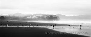 /O lugar onde as gaivotas vão beijar a Terra .