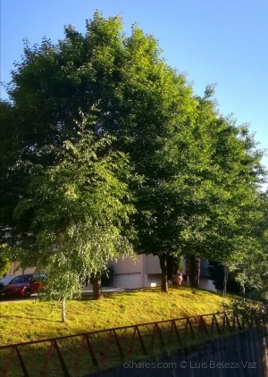 Paisagem Urbana/Jardins urbanos 2