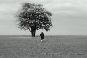 /The man and the tree...