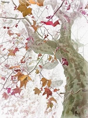 Paisagem Natural/fim de outono.