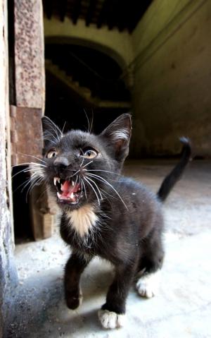 Animais/el gato fiero