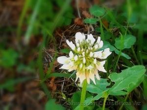 Macro/Pequeña flor