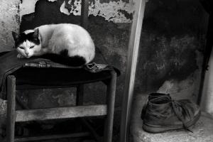 Animais/O gato e as botas