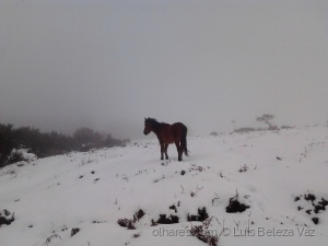 Animais/Equus ferus caballus