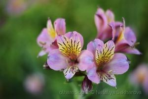 /Flores de maio em Coimbra