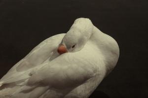 Animais/Branco