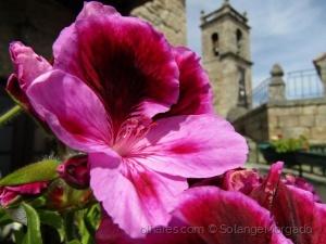 /Flores de Belmonte