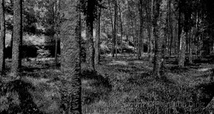 /BLACK AND WHITE TREES