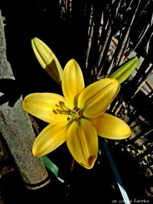 /O amarelo é uma cor....