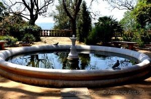 /Jardim Botânico da Ajuda XVII