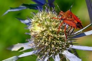 /Um pequeno insecto pousa na flor