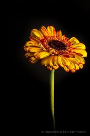 /mellow yellow II