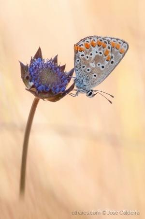 """/"""" Butterfly """""""