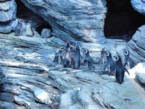 /Habitat dos pinguins