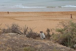 Animais/Gatinho na praia