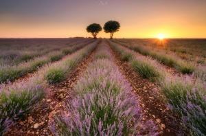 Paisagem Natural/The First Sunset at Brihuega