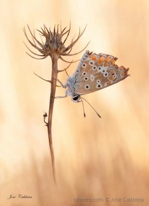 """Macro/"""" Butterfly """""""