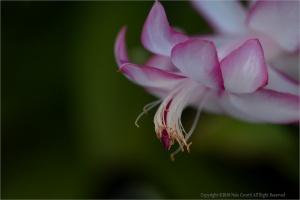 /Flor de maio...(ler)