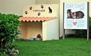 /CAFÉ DOS GATOS