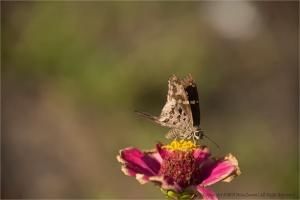 Paisagem Natural/Borboleta e a flor...(ler)