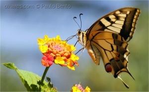 /O perfil de uma borboleta...