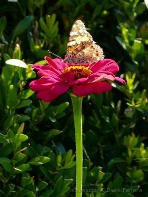 /A flor e a borboleta