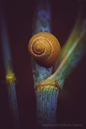/Yellow Snail in The Darkness.