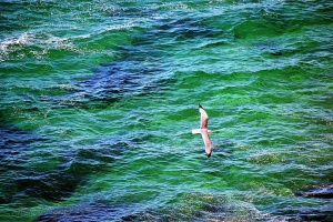 Animais/Mar Verde