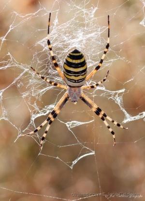 """Macro/"""" Spider """""""