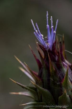 /purple beauty