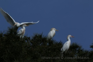 /Elegância das Aves